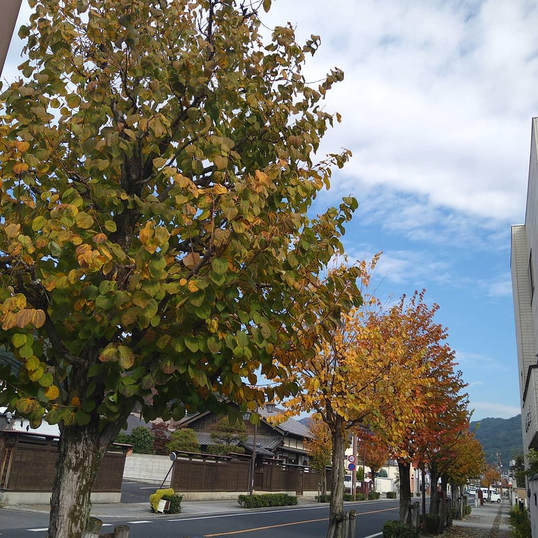 おはようございます。 少しずつ木々が色づいてきました。 紅葉の季節で気持ちの良い秋晴れです。 本日も元気に落ち葉拾いをして、営業致します! ご来店を心よりお待ちしております。