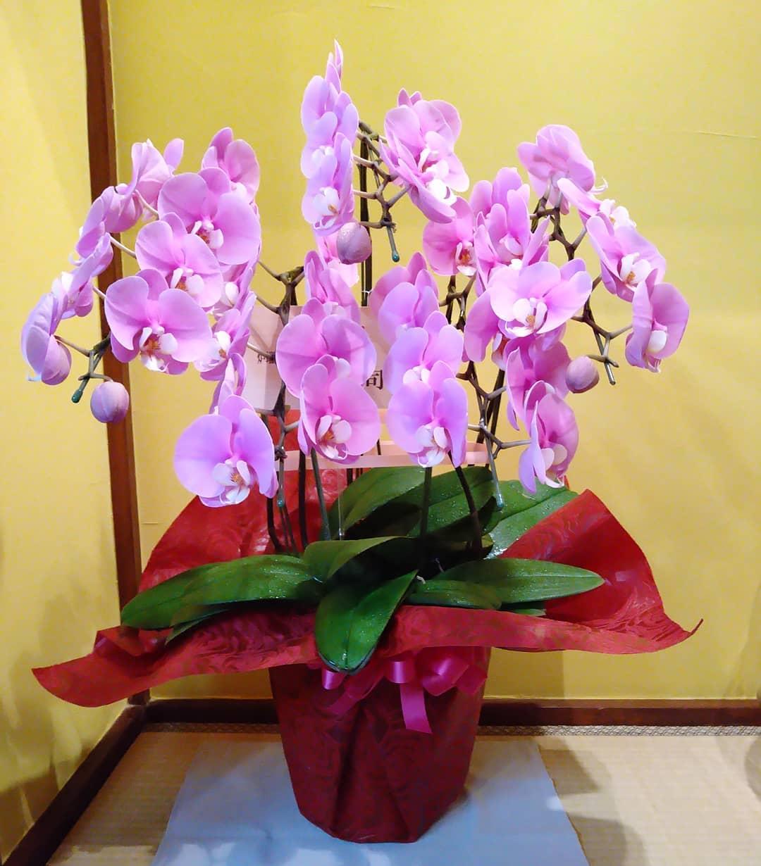 素敵なお花が届きました。 大切に大切に飾らせて頂きます。
